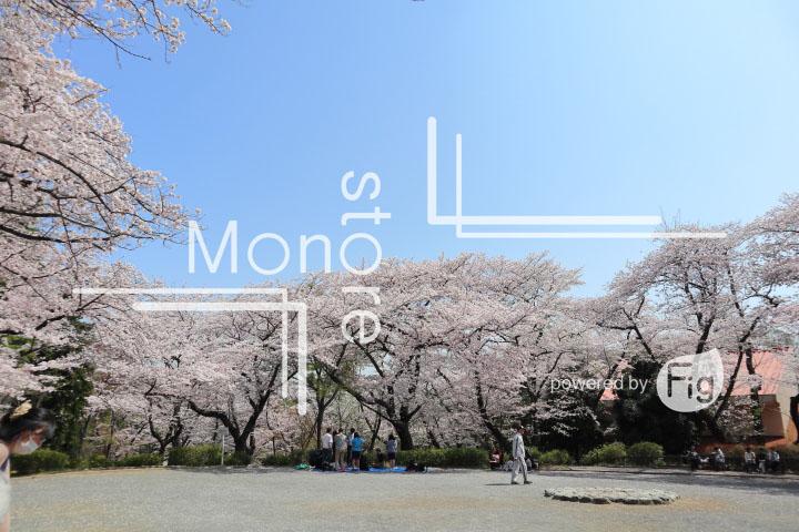 桜の写真 Cherry blossoms Photography 4987