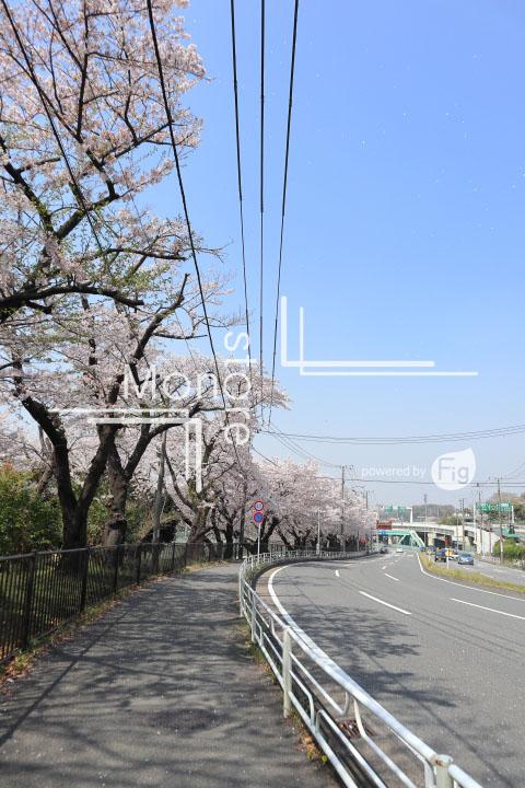 桜の写真 Cherry blossoms Photography 4994