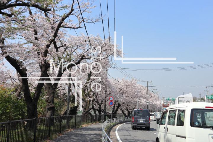 桜の写真 Cherry blossoms Photography 4996