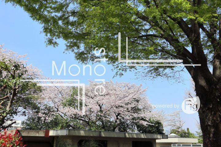 桜の写真 Cherry blossoms Photography 5028