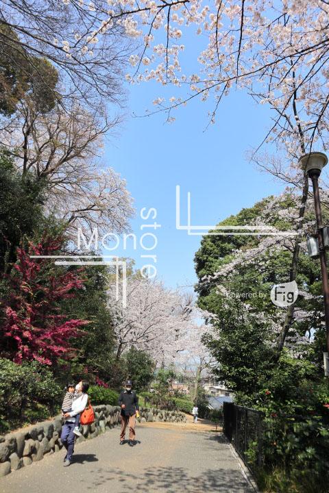 桜の写真 Cherry blossoms Photography 5040