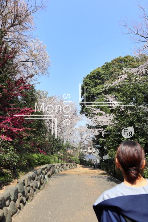 桜の写真 Cherry blossoms Photography 5041