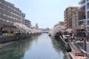 桜の写真 Cherry blossoms Photography 5111