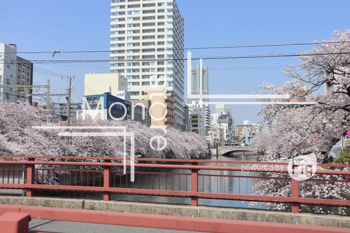 桜の写真 Cherry blossoms Photography 5114