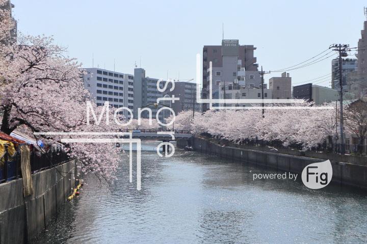 桜の写真 Cherry blossoms Photography 5116