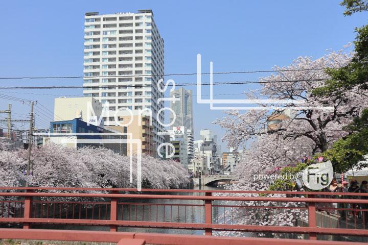 桜の写真 Cherry blossoms Photography 5118