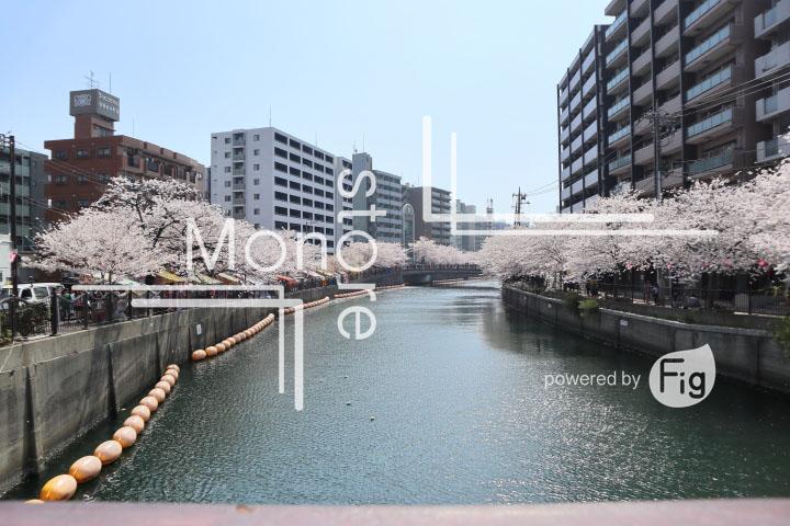 桜の写真 Cherry blossoms Photography 5123