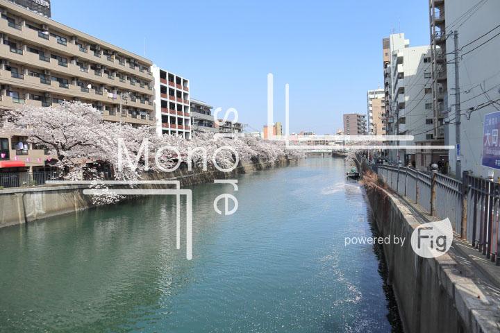 桜の写真 Cherry blossoms Photography 5128