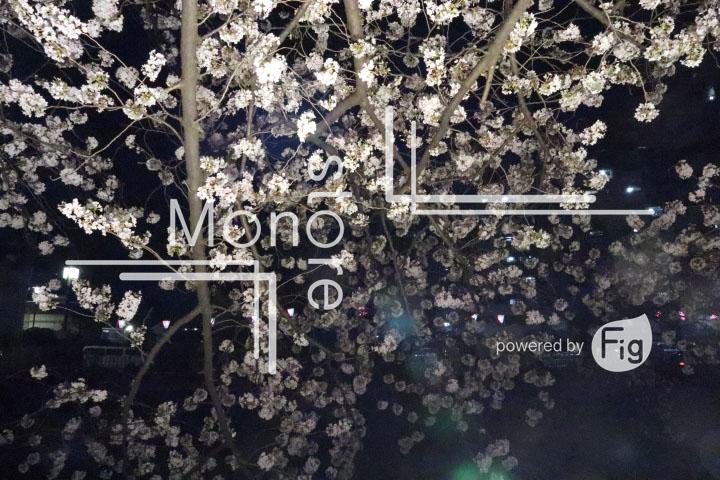 桜の写真 Cherry blossoms Photography 5191