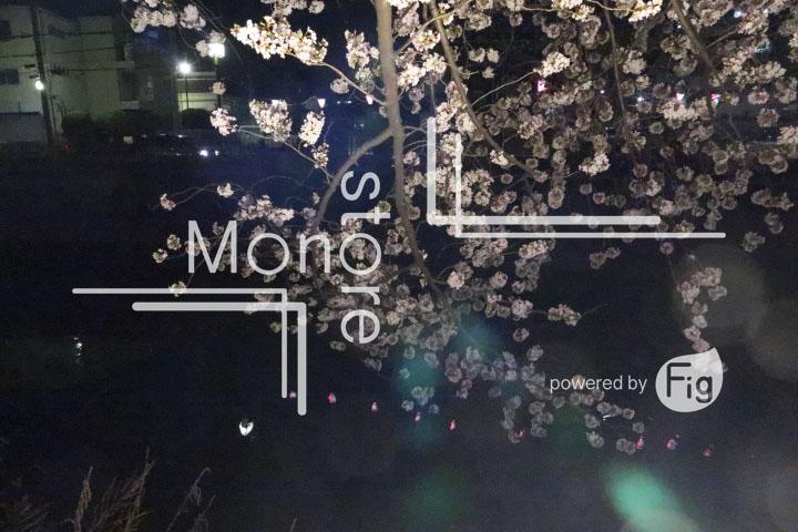 桜の写真 Cherry blossoms Photography 5193