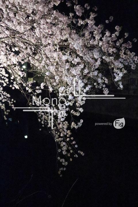 桜の写真 Cherry blossoms Photography 5196
