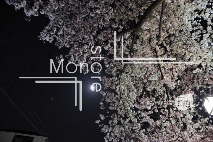 桜の写真 Cherry blossoms Photography 5217