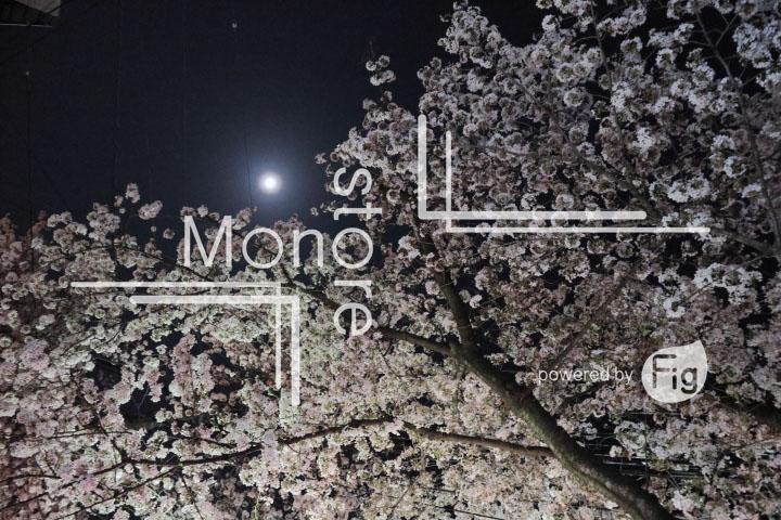 桜の写真 Cherry blossoms Photography 5219