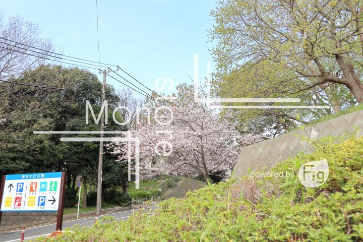 桜の写真 Cherry blossoms Photography 5232