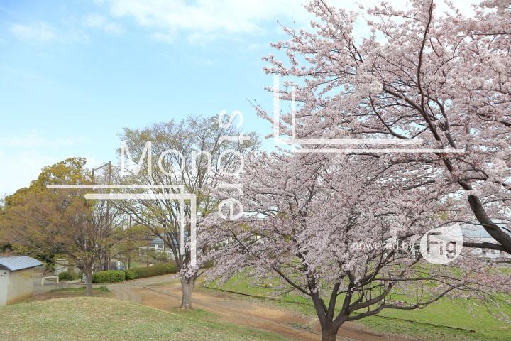 桜の写真 Cherry blossoms Photography 5240