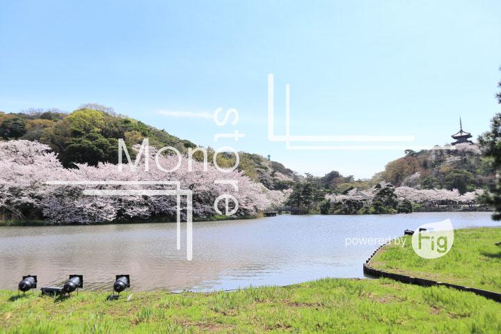 桜の写真 Cherry blossoms Photography 5358