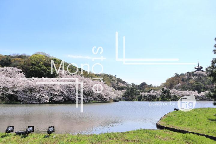 桜の写真 Cherry blossoms Photography 5360