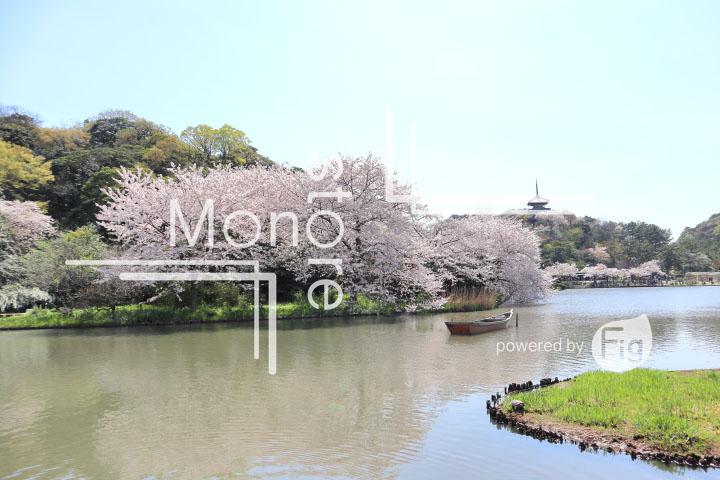 桜の写真 Cherry blossoms Photography 5367