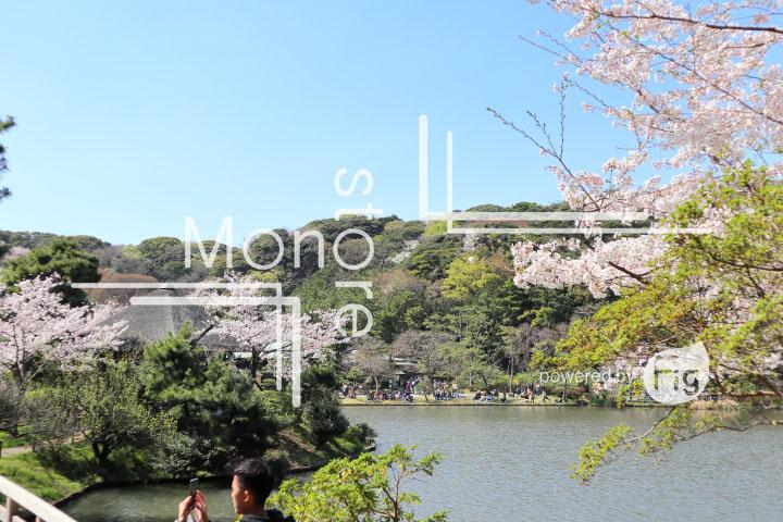 桜の写真 Cherry blossoms Photography 5405
