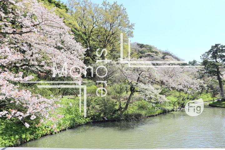 桜の写真 Cherry blossoms Photography 5410