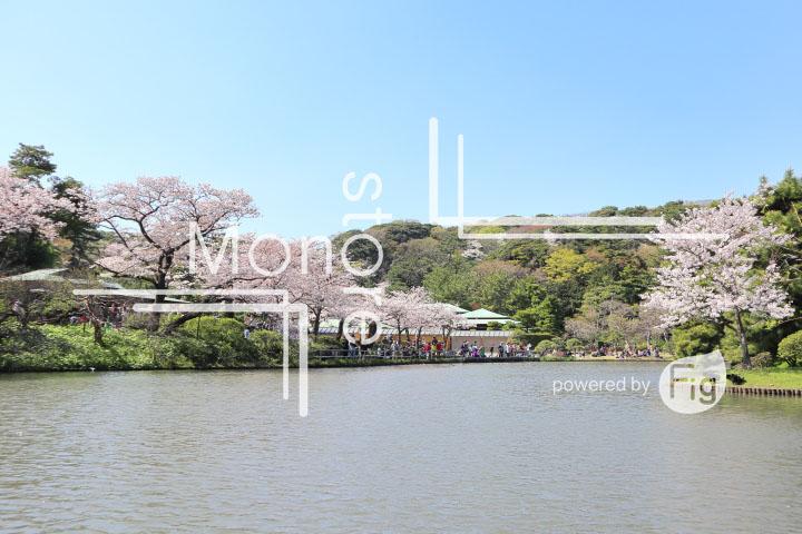 桜の写真 Cherry blossoms Photography 5428