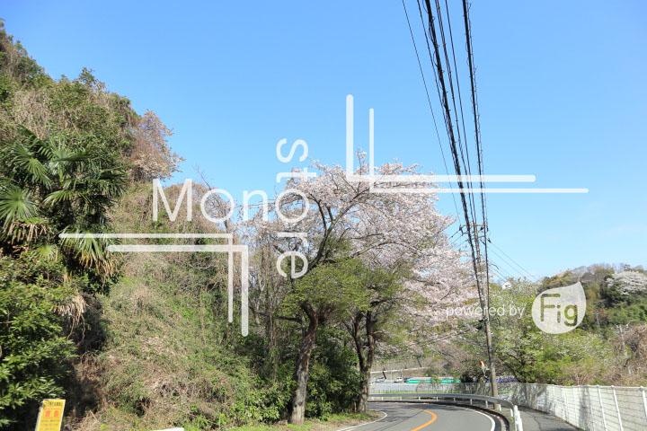 桜の写真 Cherry blossoms Photography 5468