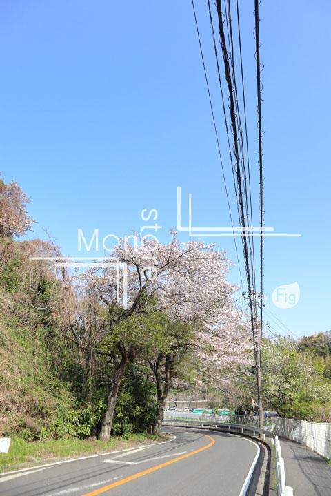 桜の写真 Cherry blossoms Photography 5469