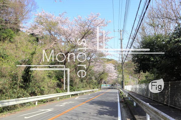桜の写真 Cherry blossoms Photography 5473