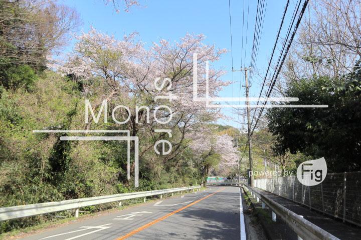 桜の写真 Cherry blossoms Photography 5474