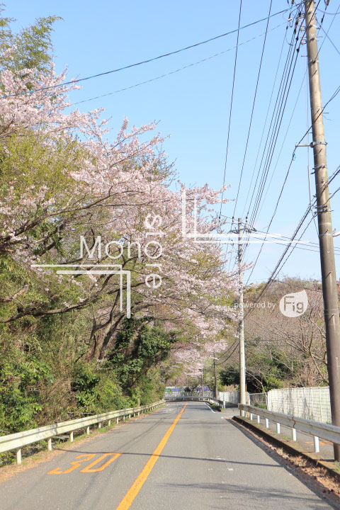 桜の写真 Cherry blossoms Photography 5477