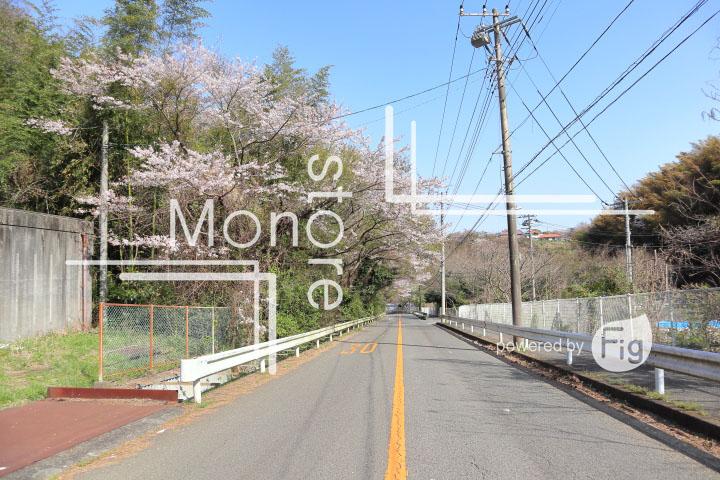 桜の写真 Cherry blossoms Photography 5479