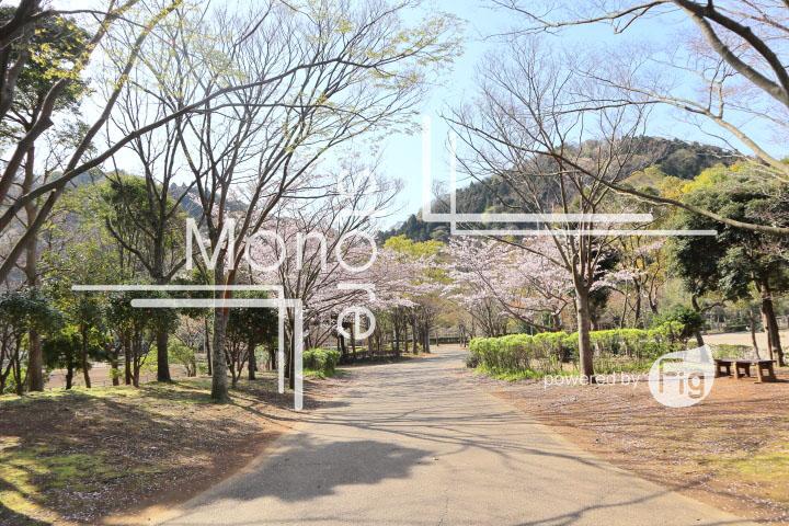桜の写真 Cherry blossoms Photography 5517