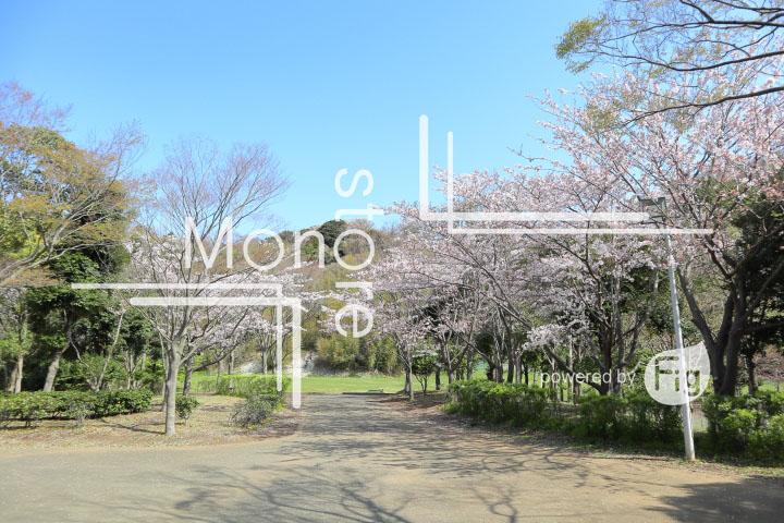 桜の写真 Cherry blossoms Photography 5519