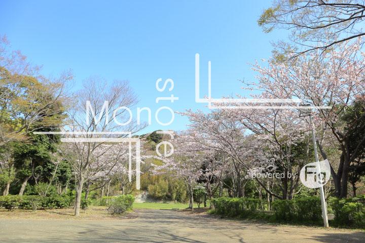 桜の写真 Cherry blossoms Photography 5520